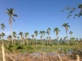 palms on the bike road